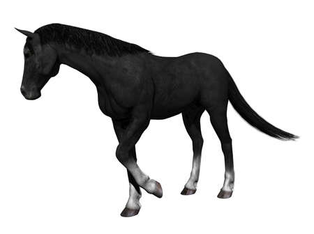 raytracing: A horse