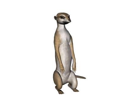 3D Illustration of a sitting meerkat
