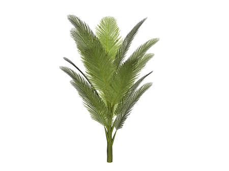 Illustration of a palm bush (raytraced image) Stock Photo
