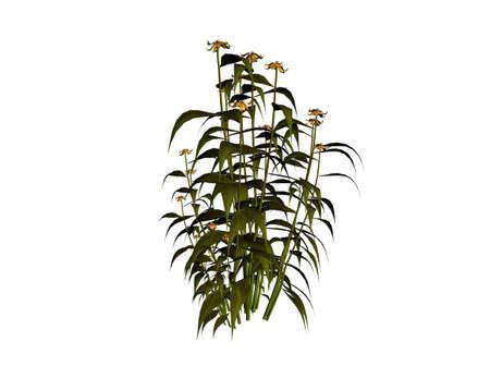 3D illustration of a plant Stock Illustration - 7149310