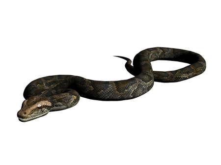 3D Illustration of a python Reklamní fotografie