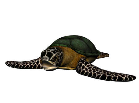 raytrace: 3D Illustration of a sea turtle Stock Photo