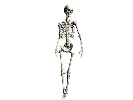 raytrace: 3D Illustration of a skeleton