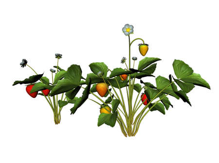 raytrace: 3D Illustration of a strawberry plant Stock Photo
