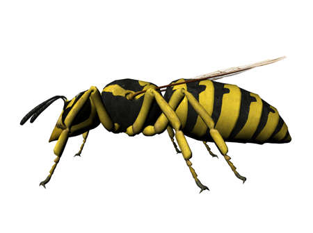 A resting wasp, rendered with Bryce 6 Reklamní fotografie