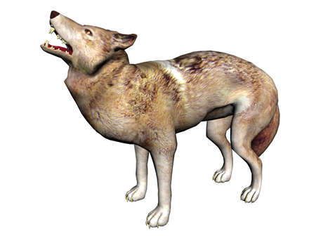 3D Illustration of a wolf illustration