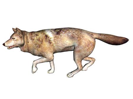 3D Illustration of a wolf Stock Illustration - 7149242