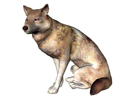 raytrace: 3D Illustration of a wolf Stock Photo