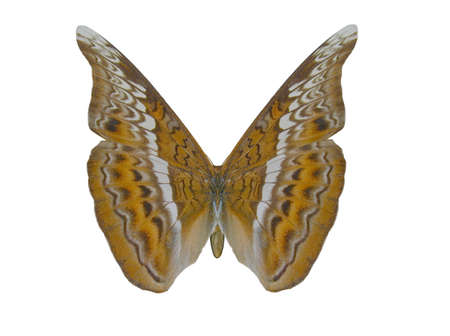 raytrace: Illustration of a butterfly, Admiral, ray-traced image