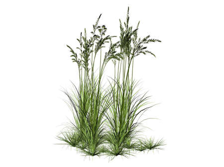 3D Illustration of a bush of grass