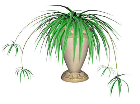 Illustration of a spider plant, a hanging plant Stock Illustration - 7149489