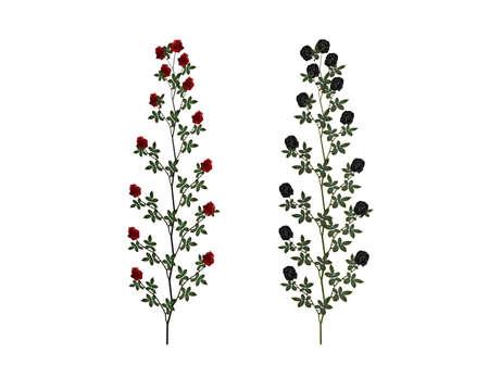 赤と黒のローズのイラスト 写真素材