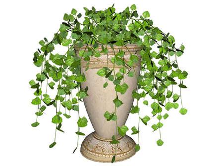 Illustration of a swedish ivy, a hanging plant Stock Illustration - 7149587