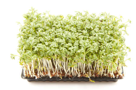 cress: Cultivated cress