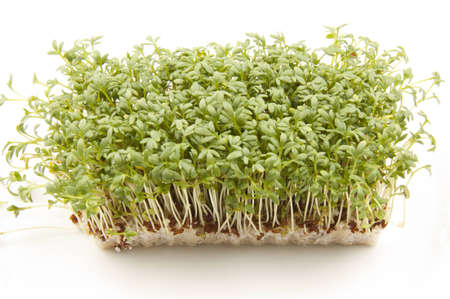 cress: cultivated cress Stock Photo