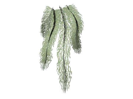 Illustration of moss, isolated against white background Banco de Imagens