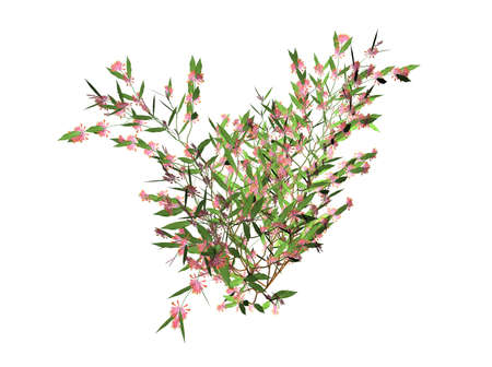 suckle: Illustration of a 3D honeysuckle with blooms