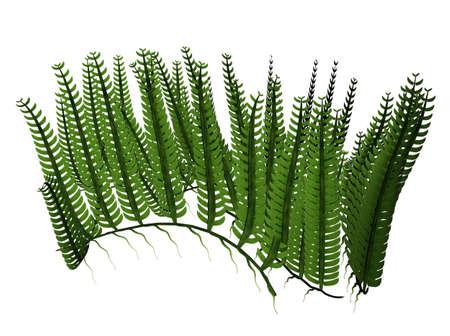 3D illustration of a water plant Reklamní fotografie
