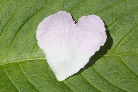 heart formed petal on a leaf