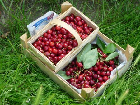 Two baskets with cherries in the grass Stock Photo - 7214321