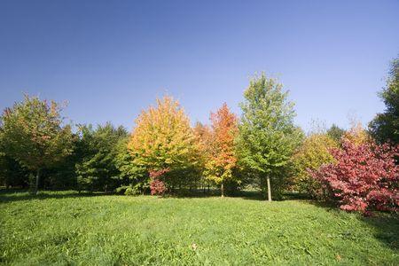 Autumn trees Stock Photo - 1807848