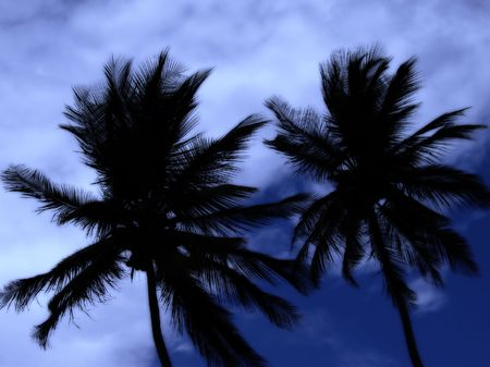 two palm trees at midnight - in a thunderstorm on the caribbean island tobago photo
