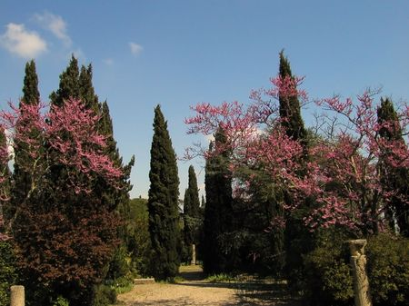 bloomy: Mediterranean Landscape with bloomy almonds and cypresses