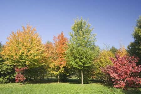 indian summer - trees in autumn colors -  Stock Photo