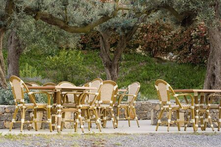 pavement cafe under an old olive tree - tables and cane chairs photo