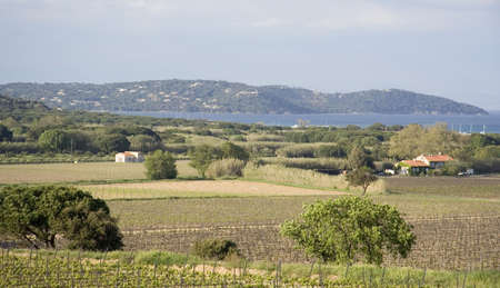 countryside on the mediterranean sea - french riviera  photo