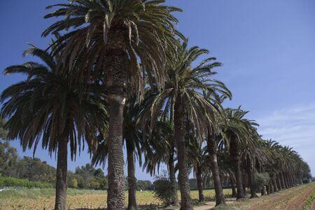pedestrian walkway under palm trees - spring on french riviera - adobe RGB photo