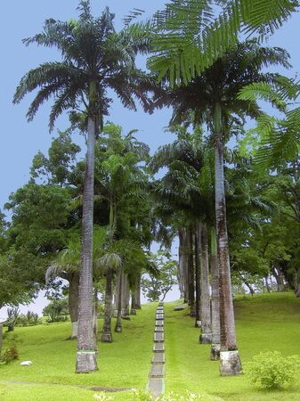 indies: fan palm avenue - tobago, west indies