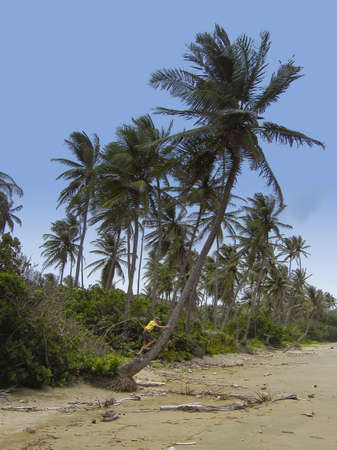 indies: boy climbing a giant palm tree - on the beach of tobago, west indies