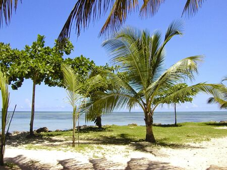 indies: tropical beach - young palm trees tobago, west indies Stock Photo