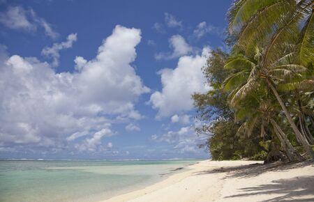 rarotonga: Palme da cocco su Tropical Beach - Rarotonga, nelle Isole Cook, Polinesia