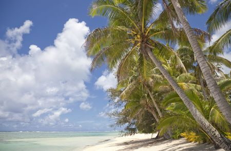 Coconut Palms on Tropical Beach - Rarotonga, Cook Islands, Polynesia