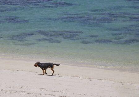 rarotonga: Tre zampe Cane su Tropical Beach - Rarotonga, nelle Isole Cook, Polinesia