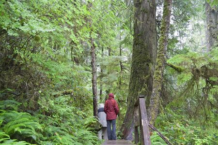 Temperate Rainforest with People on Boardwalk - Pacific Rim National Park, Vancouver Island, British Columbia, Canada photo
