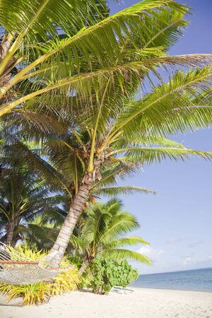rarotonga: Tropical Beach con Hammock e Coco Palms - Rarotonga, nelle Isole Cook, Polinesia