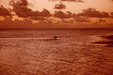 Lagoon in South Pacific Ocean with running Dog at Sunset - Rarotonga, Cook Islands, Polynesia photo