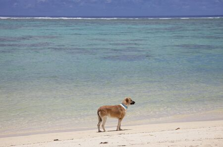 rarotonga: Dog on Tropical Beach - Rarotonga, nelle Isole Cook, Polinesia