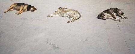 Stray Dogs resting - Istanbul, Turkey, Europe