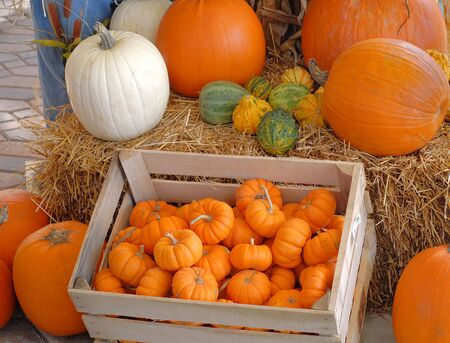 pumpkin patch: A crate full of miniature pumpkins at a pumpkin patch. Good for fall, Halloween or Thanksgiving