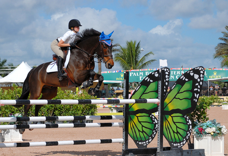 esp: WELLINGTON, FLORIDA - November 7, 2015: an unidentified rider on a bay horse clears a fence in the jumper ring at the ESP November competition held at the Palm Beach International Equestrian Center