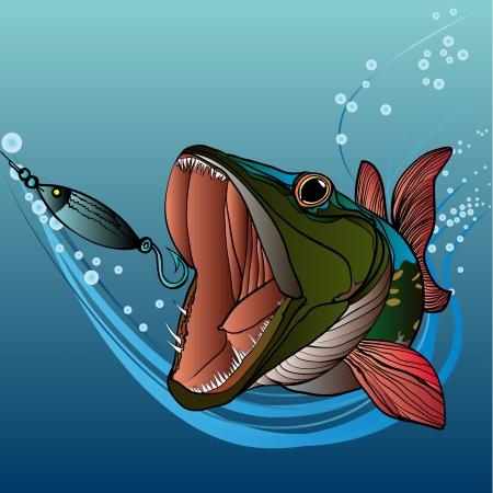 Le brochet sous l'eau attrape un appât, a ouvert la bouche et il poursuit Vecteurs