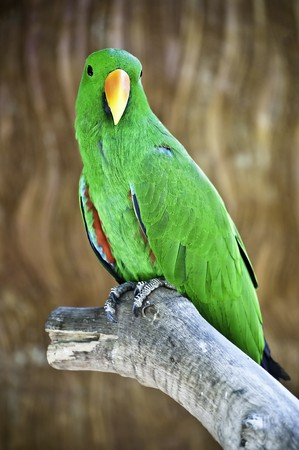 Macaw standing on branch looking to you photo