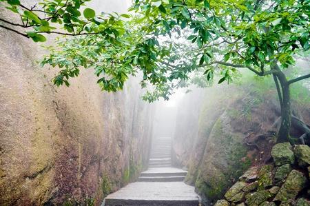 Bergpad omringd door een groene boom in Hunagshan, China Stockfoto