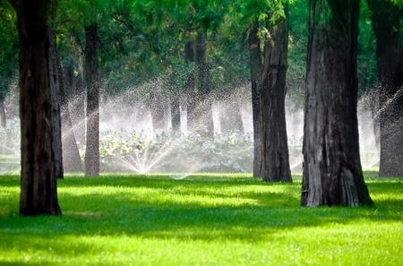 Sprinkler droplets in a lawn gardening with trees