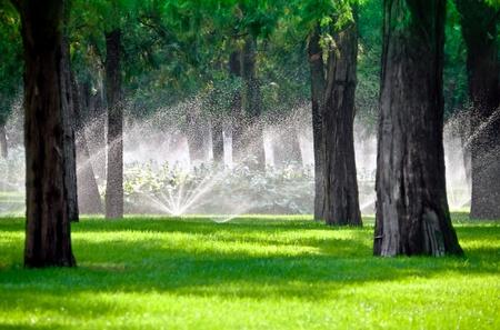 Sprinkler druppels in een gazon tuinieren met bomen