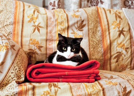 Funny elegant black and white cat  on home sofa photo
